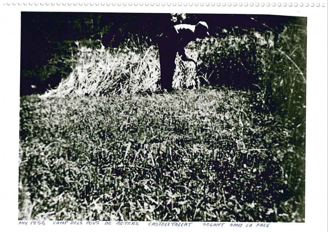 Segant amb la falç als camps del pou de Roters, 1955.Fons: Arxiu Exposició Matamargó.