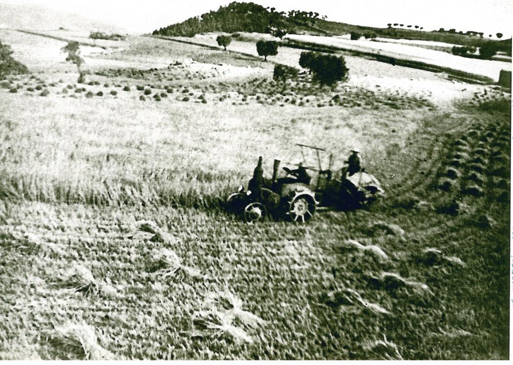 Anys cinquanta, treballant el camp. Fons: Arxiu Exposició Matamargó.