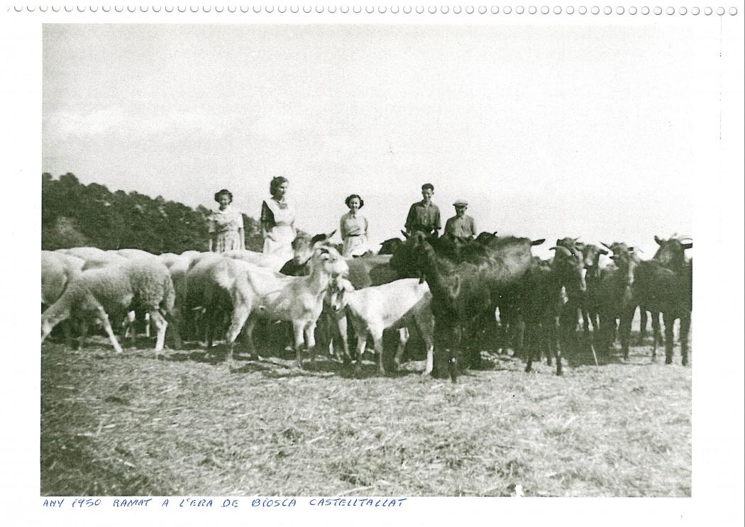 Ramat a l'era de Biosca, 1950.Fons: Arxiu Exposició Matamargó